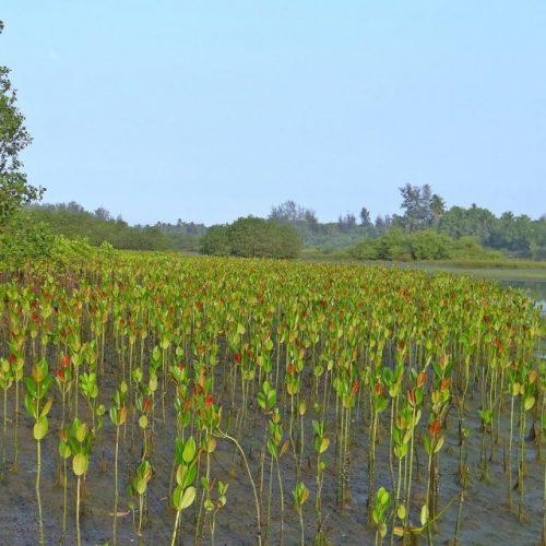 Zo planten ze 400.000 bomen per dag in Myanmar