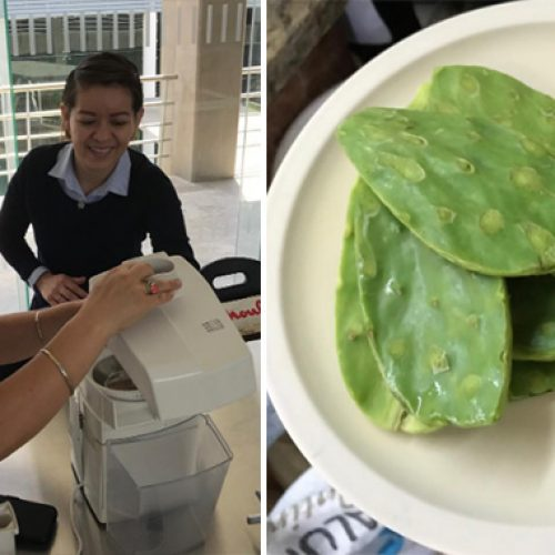 Hoe biologisch afbreekbaar 'Plastic' van cactussap te maken