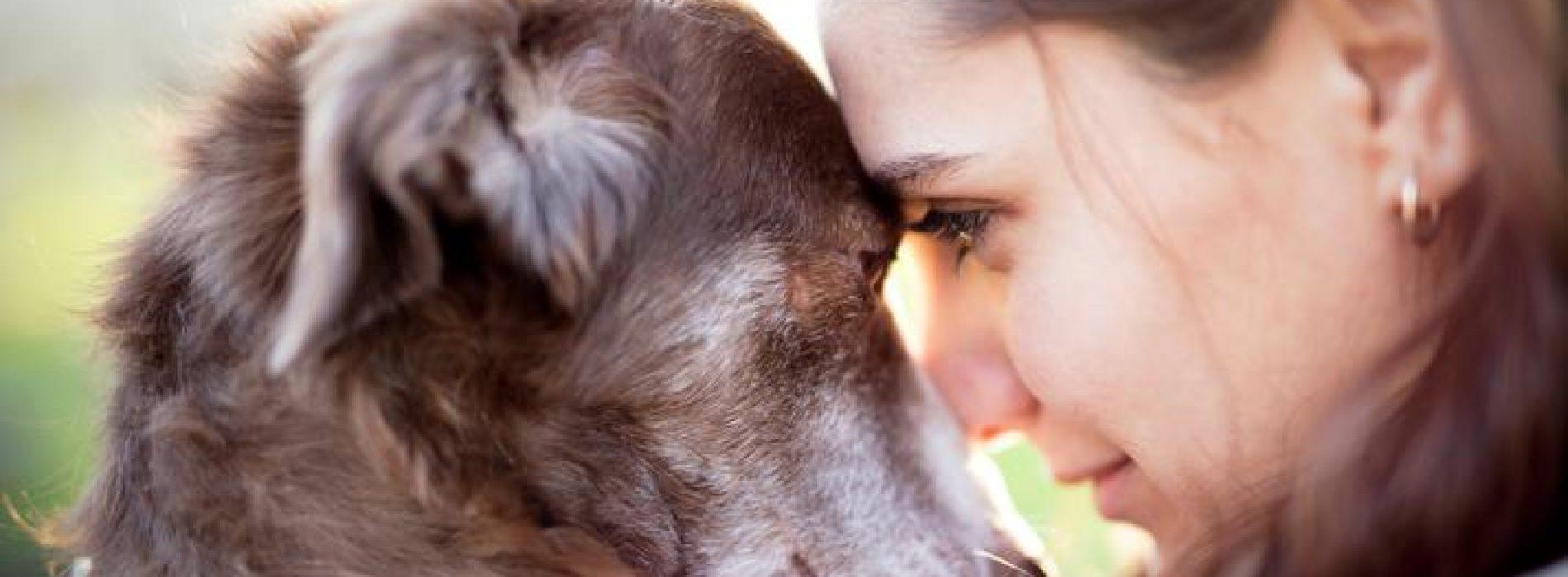 Heb je een hond? Dat is goed voor de gezondheid van dít orgaan