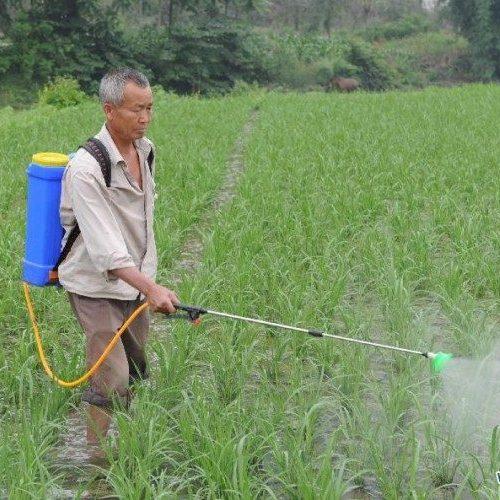 Koper let op: het eten van Chinese knoflook is een risicovolle gezondheidsbeslissing