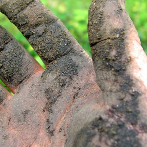 Antidepressieve microben in de bodem: hoe de grond je hersenen gelukkig maakt