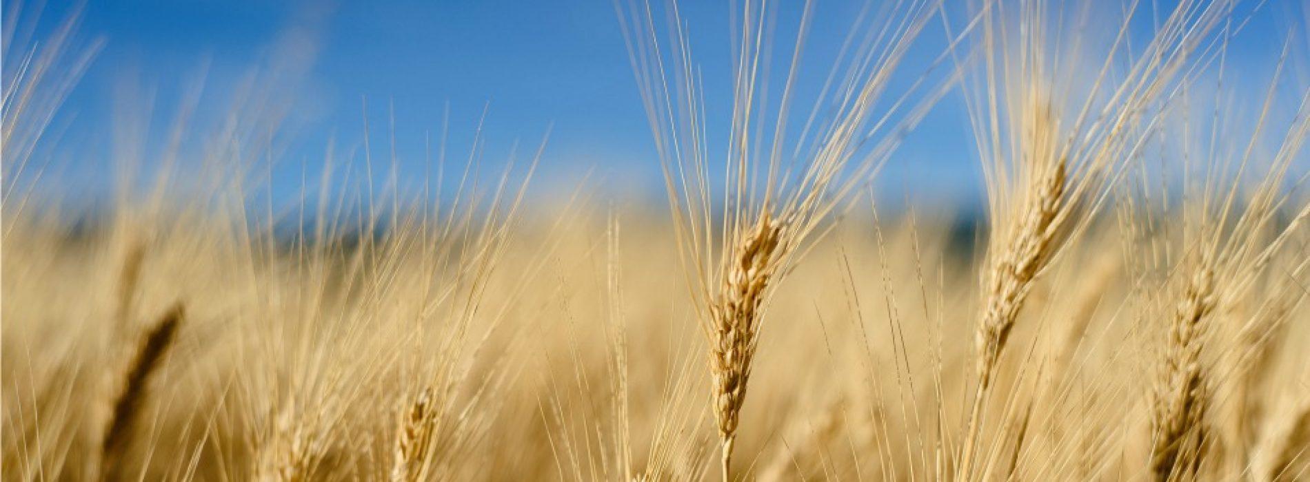 De wereld voeden zonder de planeet te vernietigen is mogelijk