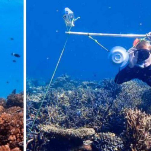 Wetenschappers spelen onderwatergeluiden om dode koraalriffen weer tot leven te brengen