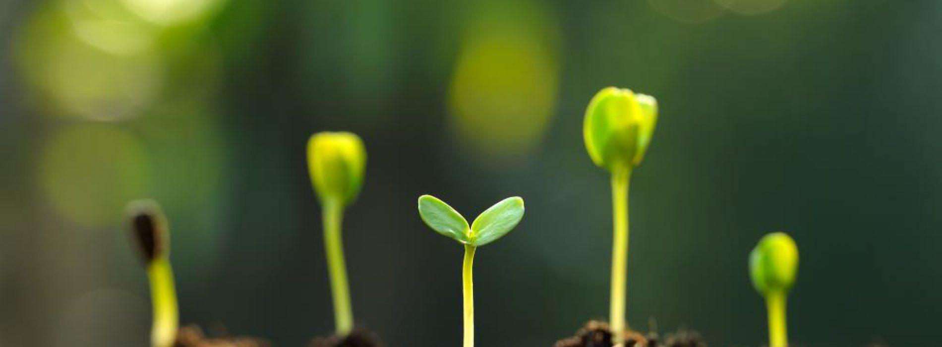 Onderzoek naar het gebruik van natuurlijke producten als alternatieven voor chemische herbiciden