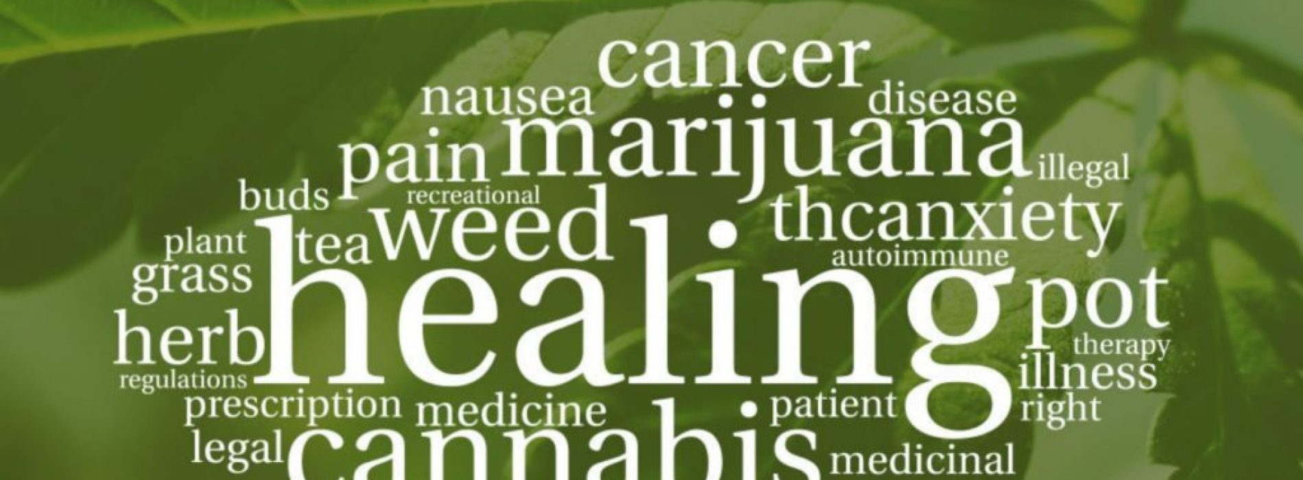 Onderzoekers ontdekken verborgen antibioticapotentieel van cannabis