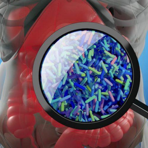 Prebiotica kunnen helpen bij het bestrijden van melanoom door anti-tumor immuniteit te activeren