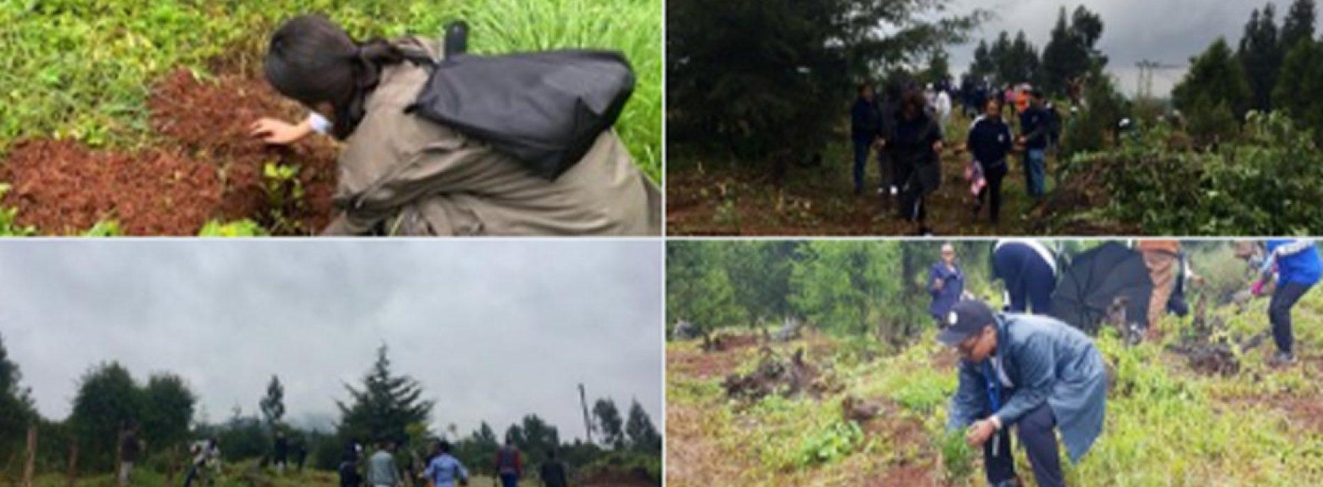 Goed bezig: Ethiopië beweert 350 miljoen bomen te hebben geplant in slechts 12 uur