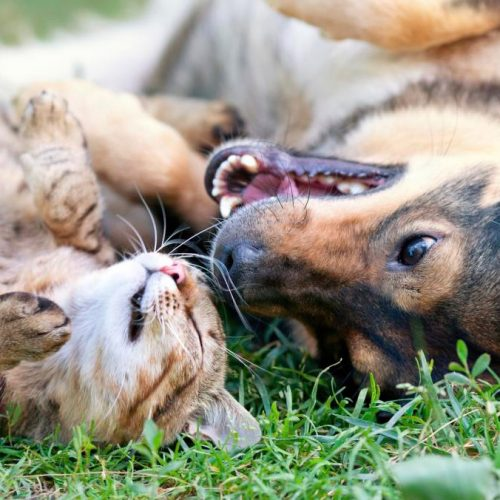 Slechts 10 minuten doorbrengen met uw huisdieren verbetert uw humeur en verlicht stress, zeggen wetenschappers