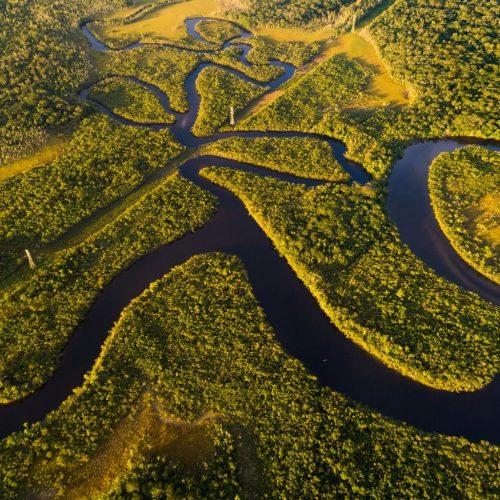 Goed nieuws voor de longen van de aarde nu de inheemse Amazonegroep een illegale boomkapzaak wint