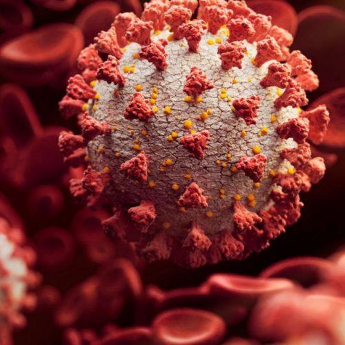 Onderzoekers zeggen dat op cannabis gebaseerde drugs resistentie kunnen bieden tegen SARS-CoV-2