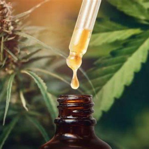 Onderzoekers suggereren dat van cannabis afgeleide CBD de dodelijke longontsteking veroorzaakt door COVID-19 kan helpen verminderen