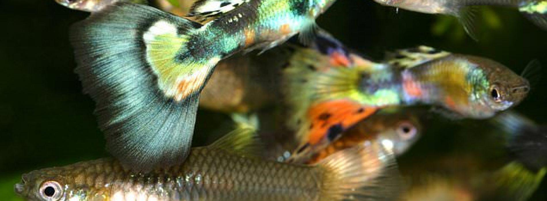 """Populair antidepressivum verandert vissen in """"zombies"""", blijkt uit nieuw onderzoek"""