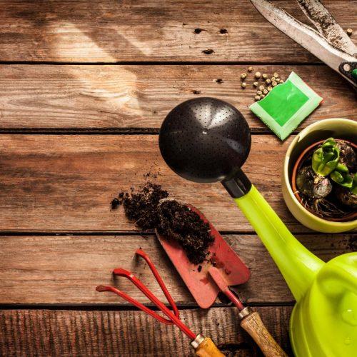 Basisprincipes van tuinieren: oogsten en bewaren van zaden van tuinplanten