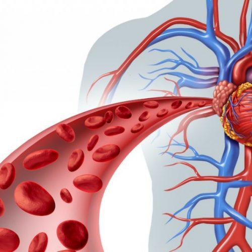 9 kruiden om de bloedcirculatie en hartfunctie te verbeteren