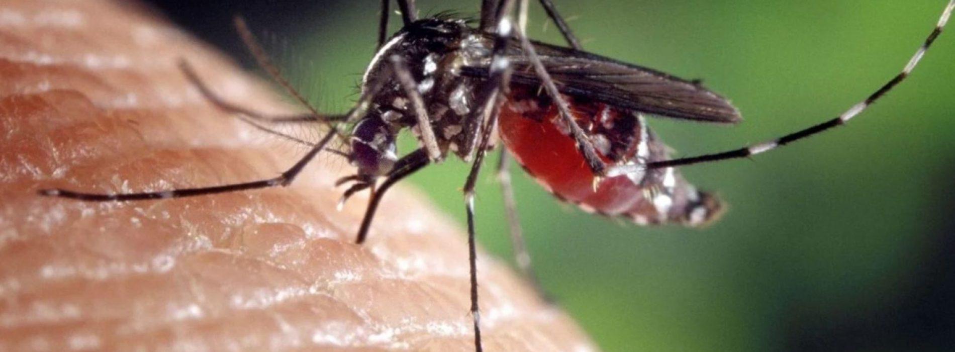 """Florida wil een miljard genetisch gemodificeerde muggen vrijlaten in  """"Nachtmerrie"""" -experiment"""