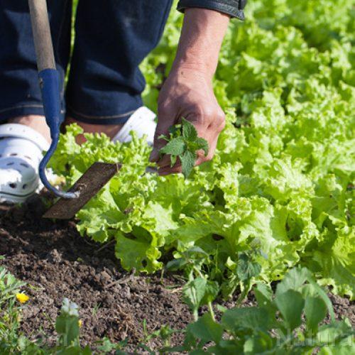 Top 5 groenten die goedkoper zijn om te telen dan om te kopen
